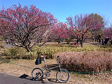 170219cycling.jpg
